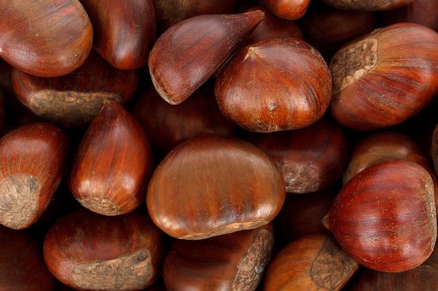 European chesnut