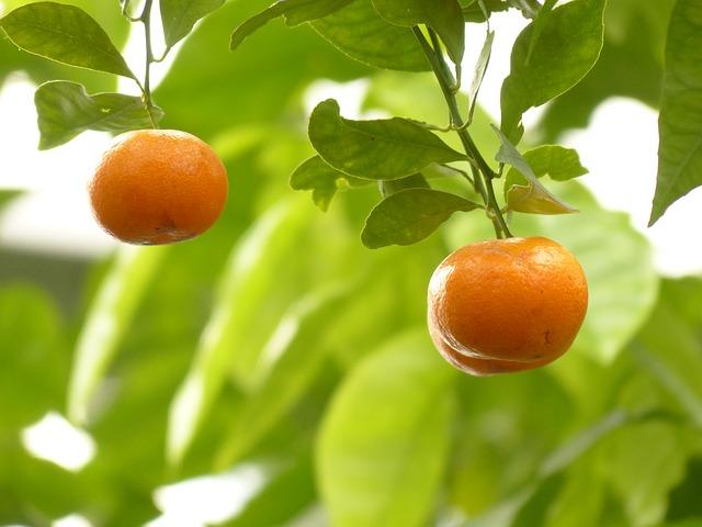 vitaminas y proteinas que contiene la mandarina